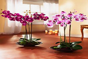 Растения комнатные по знаку зодиака