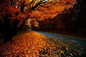 прогноз астрологический ноябрь 2014
