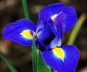 по знаку зодиака цветы
