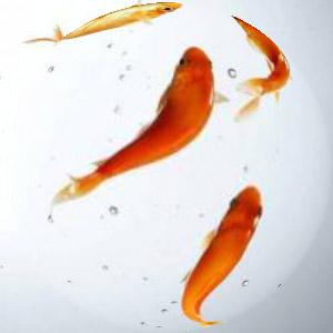 камень талисман Рыбы знак зодиака