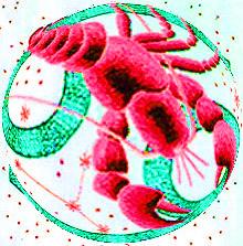 числа рак знак зодиака