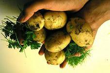 по лунному календарю уборка картофеля