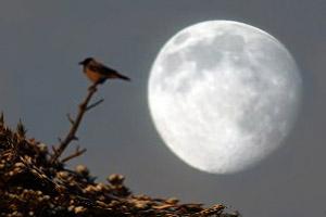 деньги и лунный календарь