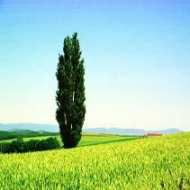 Лев знак зодиака дерево